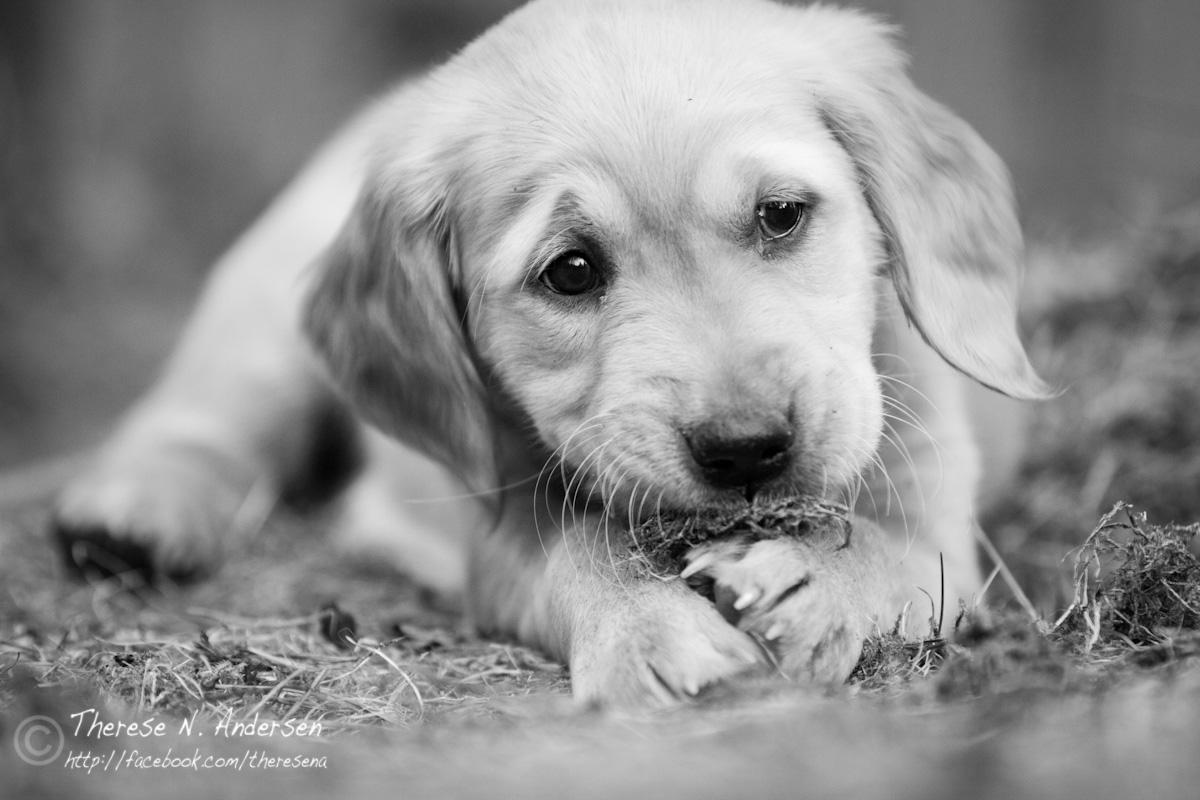 redde hunder pa nyttarsaften
