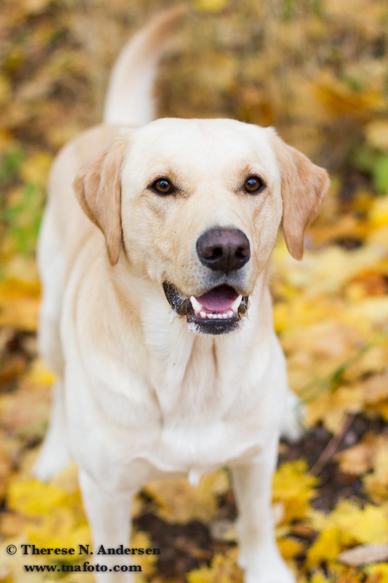 bilder av hunder